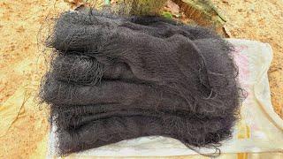 Bẫy Chim Ri Dính Đặc Lưới Cả Trăm Con- Cách Bắt Chim Sắc Ô Bằng Lưới Bẫy Chim Tàng Hình