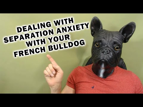 How To Help Your French Bulldog With Separation Anxiety