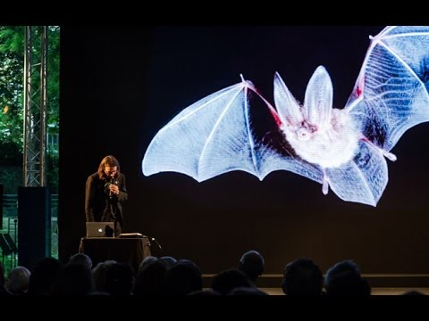 A Bat night, avec Patti Smith, Cédric Villani,... | Les Nuits de L'Incertitude - 2014