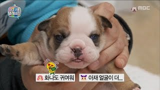[My Little Television] 마이 리틀 텔레비전 - Lee Gyeonggyu named puppy and exhausted 20161126