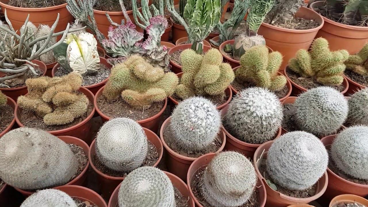 mundo cactus c rdoba capital vivero especializado en On viveros en cordoba capital
