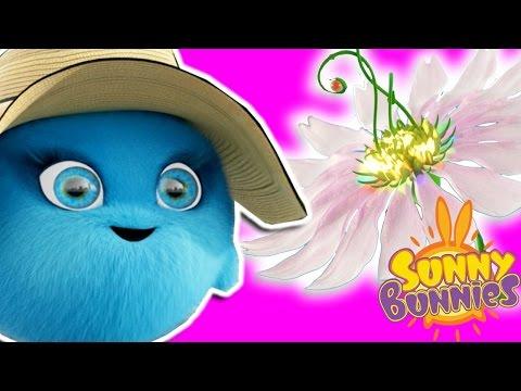 Cartoons For Children | Sunny Bunnies  MAGIC FLOWER | SUNNY BUNNIES COMPILATION