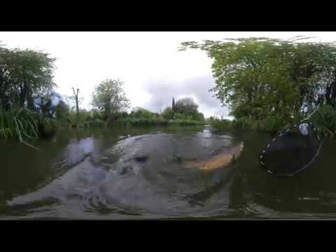 Fly Fishing For Carp in 360 5.7k