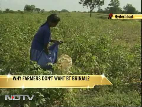 Why farmers don't want Bt brinjal?