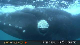 Incredible close encounter with a whale