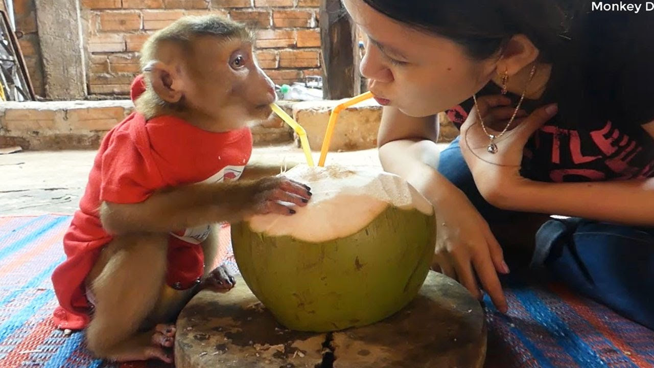 Aww So Cool!! Dodo Very Sweet Share Coconut Juice With Mom In Summer Day