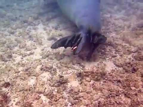 Monk Seal - Hawaii