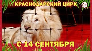 Краснодарский цирк. Гиганты Африки (5 сек)