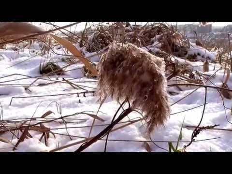 Relaxing Walk on Snow - 1 Hour HD -Relaxing Snow Sound in Park by the Lake