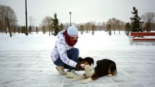 Как отучить собаку лаять во время занятий(Мой блог http://recccy.com/, 2015-05-06T13:15:05.000Z)