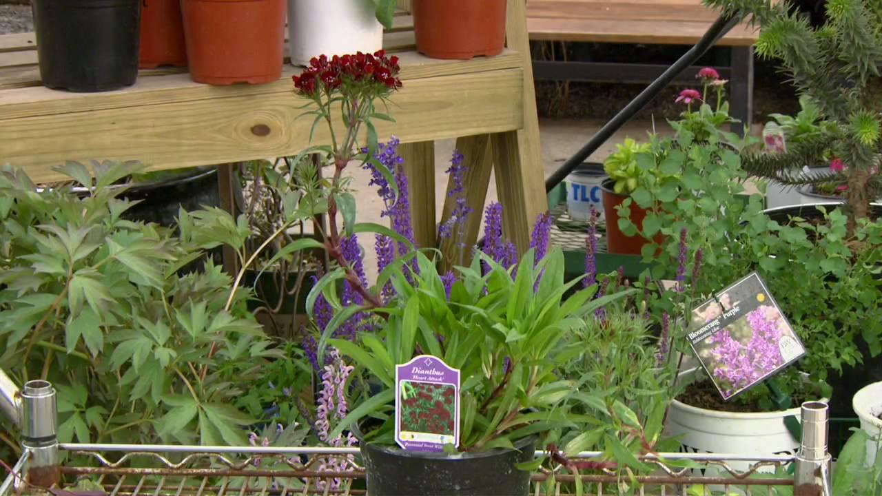 New Perennials At TLC Garden Center