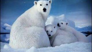 Ecocide-- Mass Species Extinction: Arctic #1-- RED ALERT USA! Most Endangered Ecoststem 2013