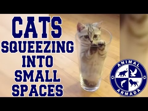 animals in small spaces cats squeezing into small spaces compilation boxes fish bowls