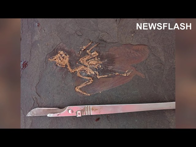 Fossil Of New Bird Species Resembling Great Tit