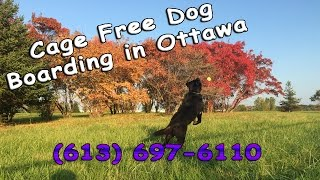Cage Free Dog Boarding Ottawa | Porter Boarding Review