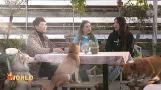 WI Spring Festival Special: Man's Best Friends