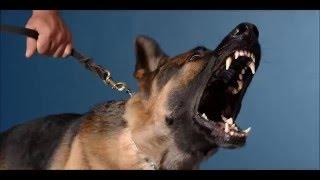 angry dog sound effects - efek suara anjing marah