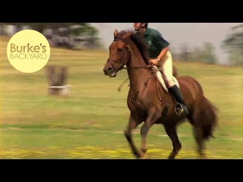 Burke's Backyard, Irish Draught Horse Road Test