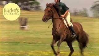 Don Burke road tests the Irish Draught Horse, one of the greatest a...