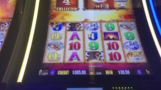 Buffalo Gold Slot Machine Wins