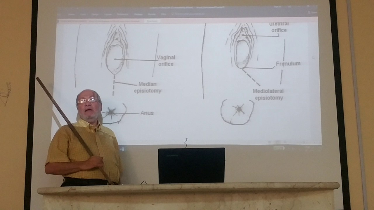 anatomy of the perineal body by Dr.Wahdan - YouTube