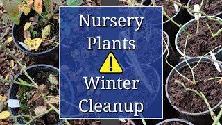 Nursery Plants Winter Cleanup
