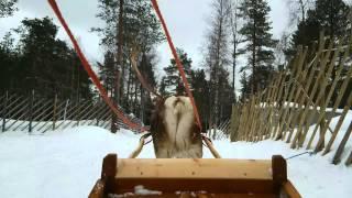 フィンランドでトナカイのソリ体験。 走り出したらうんこ。 撮影日:201...