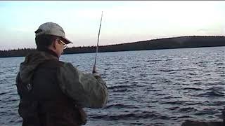 Сбор окуня в Карелии Рыбалка окунь