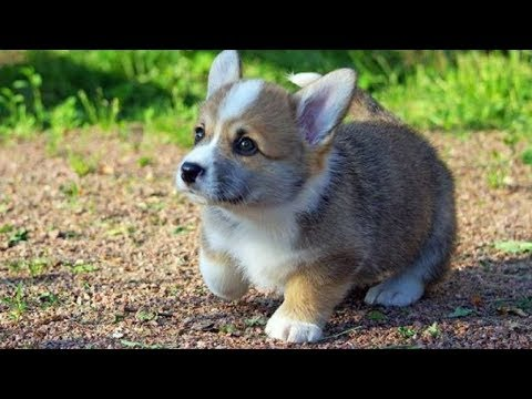Ultimate FUNNIEST DOG | Funny Pet Videos #2