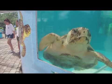 Ken Payne - Cape Cod Sea Turtles Released By Loggerhead Marinelife Center