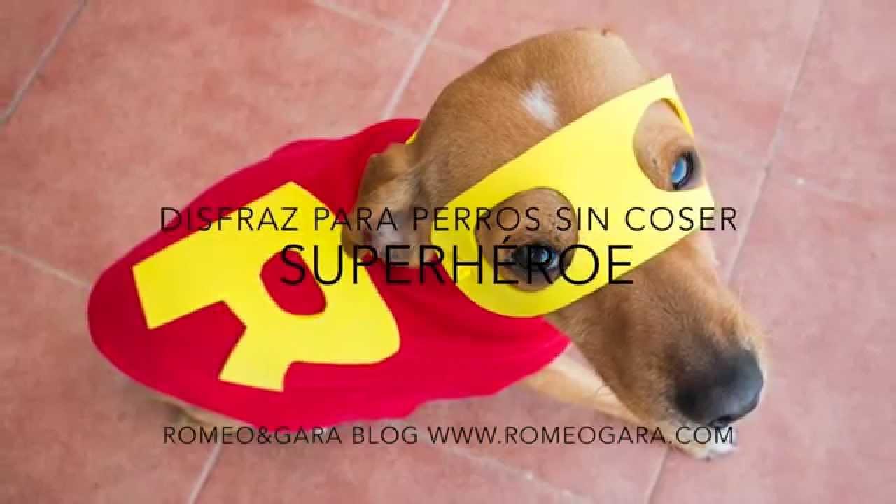 Diy disfraz de superh roe para perro sin coser youtube - Pulgas en casa sin animales ...