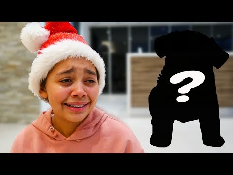 CHRISTMAS PUPPY SURPRISE!!