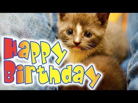 Happy Birthday Kitten - A super cute kitty birthday ecard