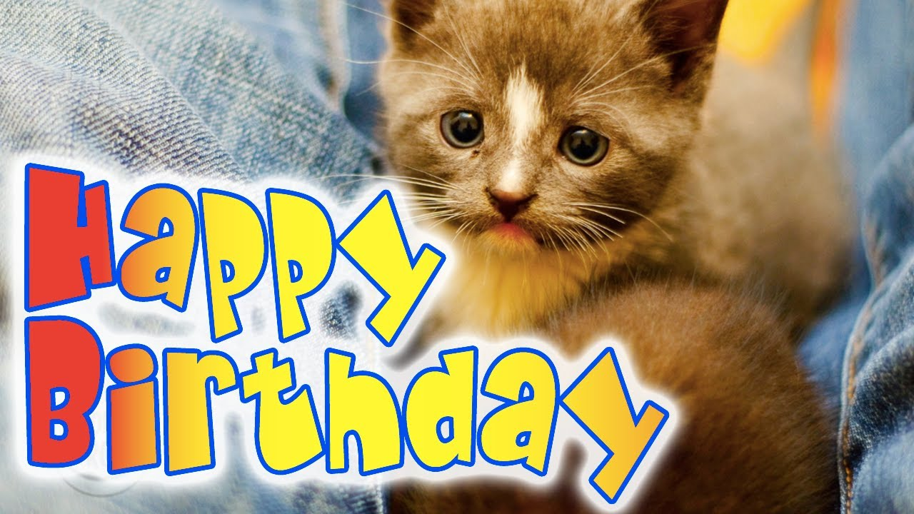 Happy Birthday Kitten - A super cute kitty birthday ecard - YouTube