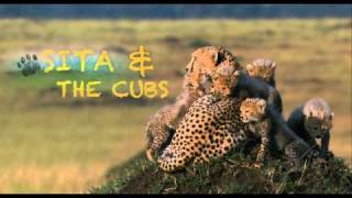 African Cats: Field Guide 1