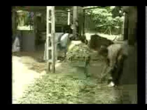 vietlinh.vn - Kỹ thuật phòng tránh rét cho trâu bò (Phần 2)