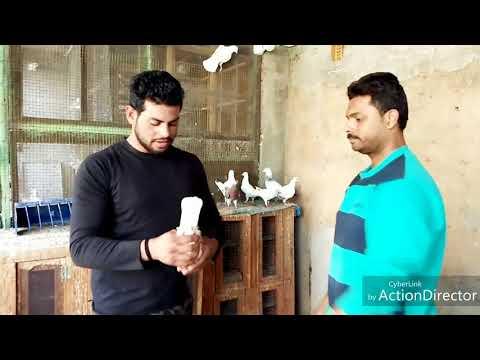 Chndni Chok Delhi '6 SANNY BHAI Madrshi pigeon