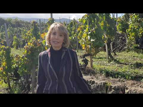 Palmento Costanzo - I vitigni autoctoni dell'Etna