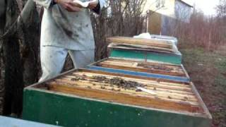 Repeat youtube video apinatura - Apifonda, administrare turte