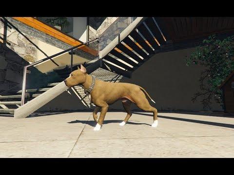 GTA 5 - Lấy chó Pit Bull đi cắn người theo hợp đồng và bị thương | ND Gaming