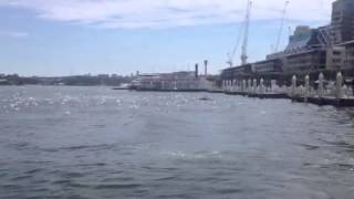 Australian Salmon in Darling Harbour