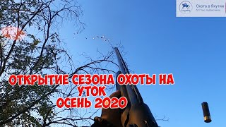 Открытие сезона охоты на уток - осень 2020. Охота глазами собаки