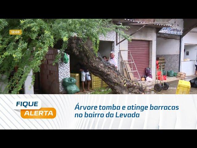 Árvore tomba e atinge barracas no bairro da Levada