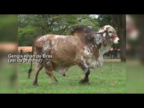 Lote 47   GENGIS KHAN DE BRAS   RRP6097 X NORUEGA FIV DO LEAL – MPL39