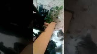 Лохматые коты в бой