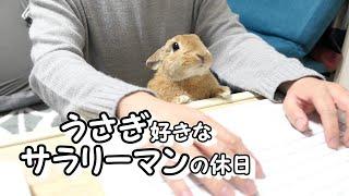 【Vlog】ウサギ好きなサラリーマンの休日