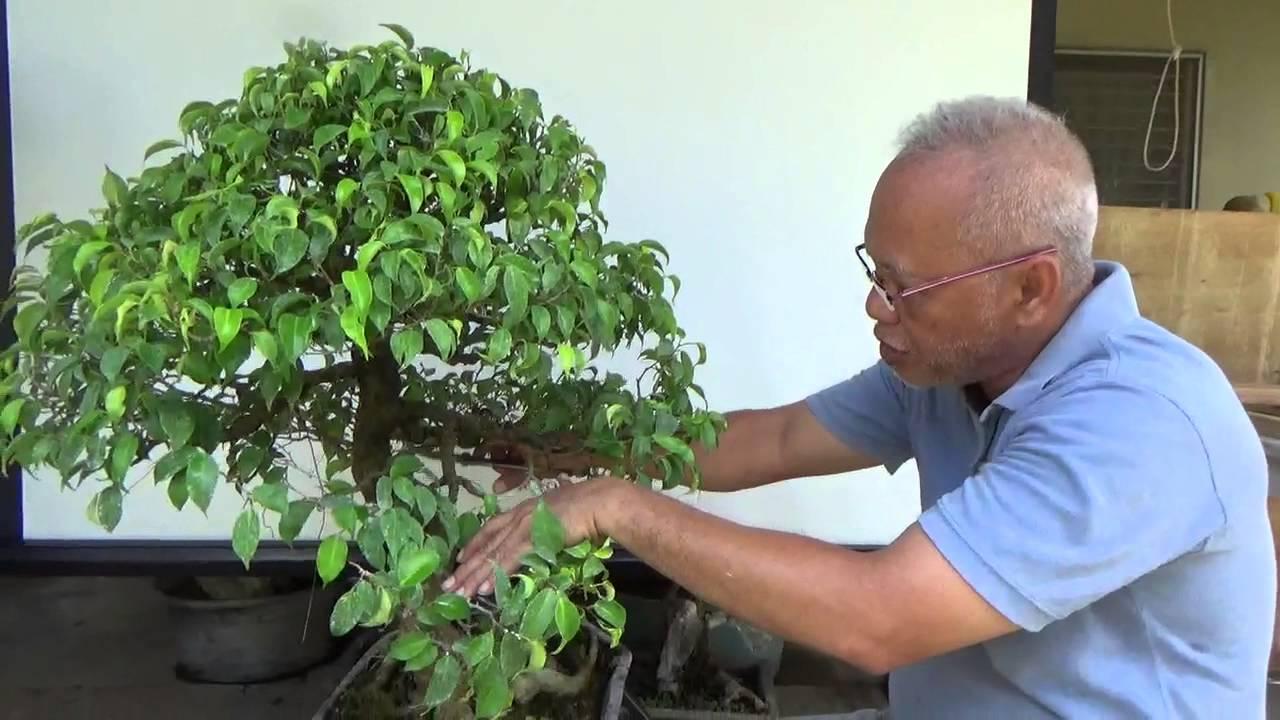 Bonsai Tutorials For Beginners T Maintenance Part 1 Of 2 You