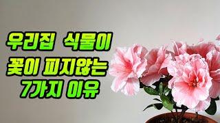 우리집 꽃이 피지않는 이유/꽃식물 키우는 기본적인 상식…