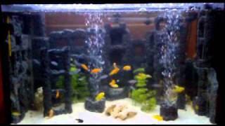 aqvarium 160 l malawi martin hanzel.mp4