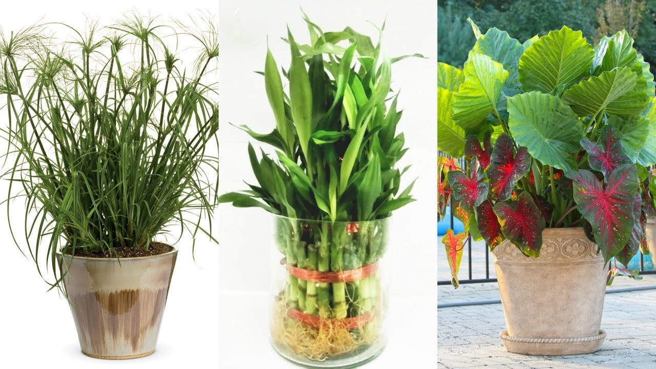 7 Potted Plants For Front Door - YouTube